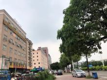广东/东莞/常平镇仓库出租